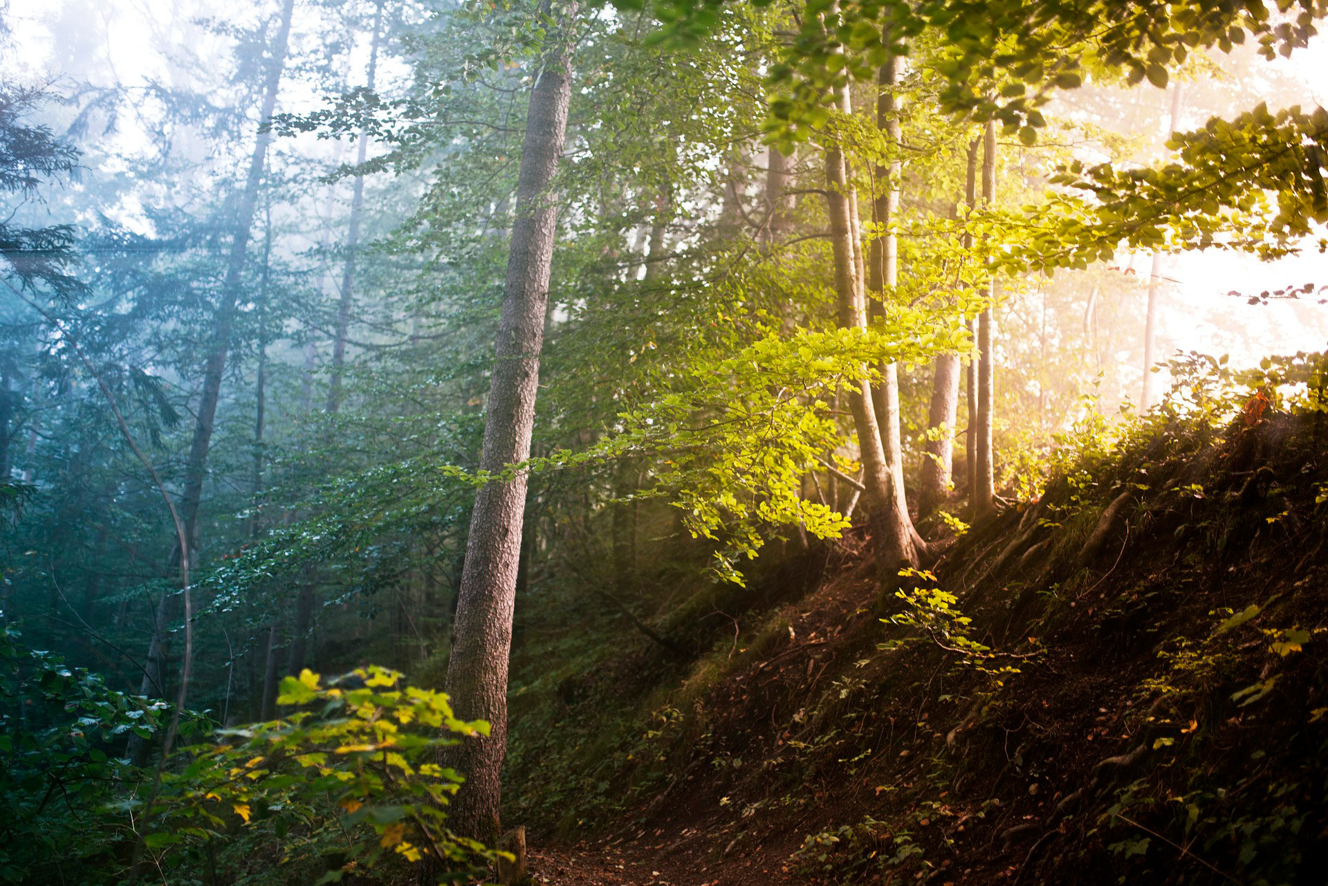 La historia del gran bosque.